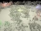 031_Bamboo_AGAA